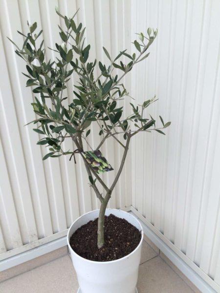 手軽に緑と暮らしてみませんか―育てやすい観葉植物ベスト5―